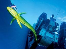 Pêche sportive à l'Alphonse Island aux Seychelles