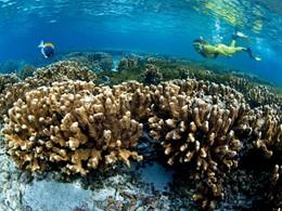 Snorkeling à l'Alphonse Island situé aux Seychelles