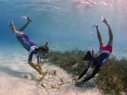 Adoptez un corail
