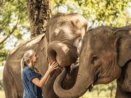 Découvrez le monde merveilleux des éléphants à l'Anantara Golden Triangle