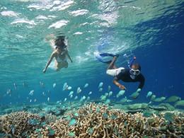 Explorez des fonds marins exceptionnels