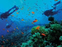 Explorez des fonds marins d'une richesse exceptionnelle de Santorin