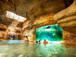 Vous vivrez de nombreuses aventures marines à l'Atlantis