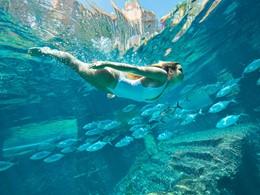 Découvrez le monde sous-marin de l'Atlantis