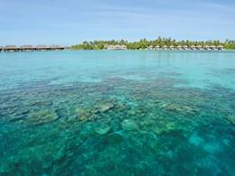 Explorez les récifs coralliensl