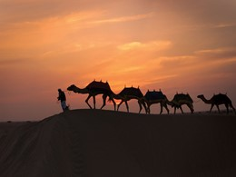 Balade à dos de chameau au Babs Al Shams Resort & Spa situé au milieu du désert de Dubaï