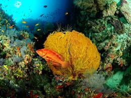 Explorez les exceptionnels fonds marins de Dhaalu
