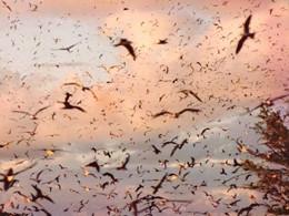 Nuée d'oiseaux dans le ciel de Bird Island