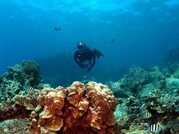 Découverte des fonds marins d'une richesse exceptionnelle au Cap Est Lagoon