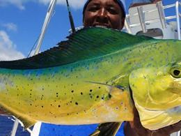 Pêche au gros