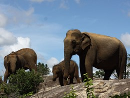 Safari au parc national de Yala