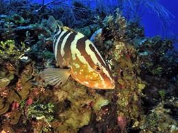 Explorez les exceptionnels fonds marins de Phuket