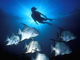 Explorez les exceptionnels fonds marins des Caraïbes