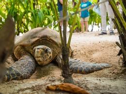 Conservation de la faune sur l'île privée de Denis
