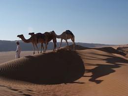 Balade à dos de dromadaire dans le desert au Desert Night Camp au sultanat d'Oman