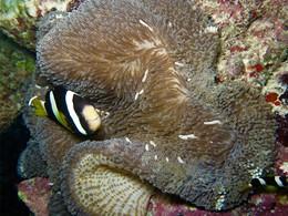Explorez les fonds marins de l'atoll