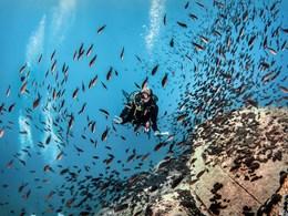 Explorez les fonds marins