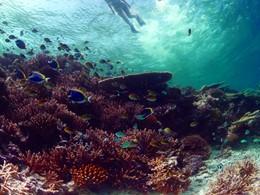 Explorez les fonds marins de l'atoll de Faafu