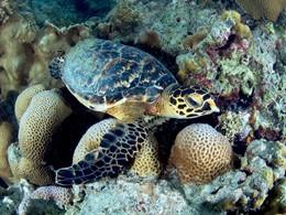 Explorez les fonds marins de l'île