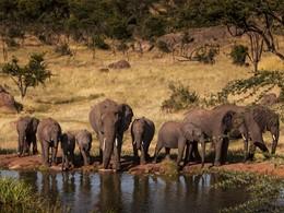 La faune sauvage