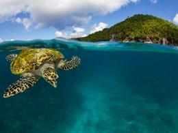 Découvrez la faune marine abondante