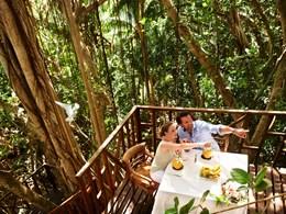 Profitez d'un repas dans les branches d'un banian