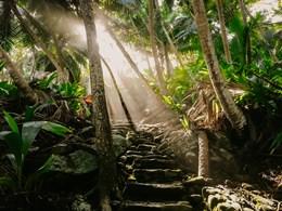 Explorez la jungle