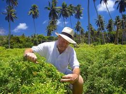 Jardin organique du Fregate Island aux Seychelles
