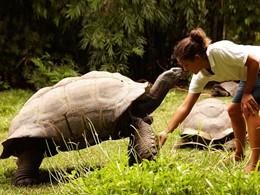 Rencontrez les tortues de l'hôtel Fregate Island