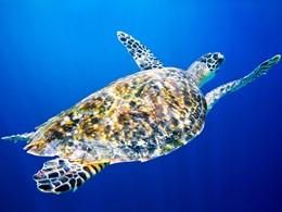 Explorez les fonds marins qui entourent les Seychelles