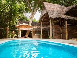Jungle Suite