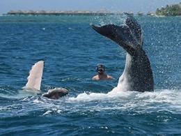 Nagez avec les baleines au Green Lodge à Moorea