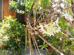 Le jardin de l'hôtel Havaiki en Polynésie