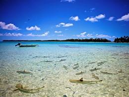 L'eau cristalline autour de l'île de Rangiroa