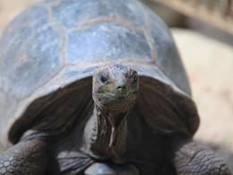 Conservation de la faune à La Belle Tortue aux Seychelles
