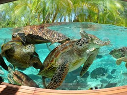 Sanctuaire de tortues