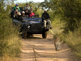 Une experience safari de luxe au Lion Sands Game Reserve