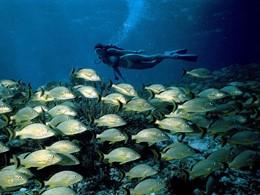 Explorez les exceptionnels fonds marins de la Floride