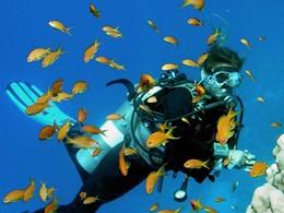 Explorez les fonds marins de l'atoll d'Ari