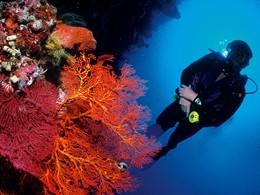 Plongez dans les fonds marins proches de l'hôtel