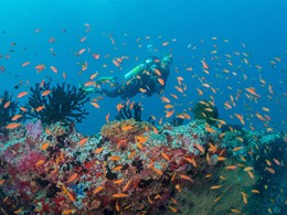 Découvrez les fonds marins de l'atoll de Baa