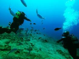 Partez à la découverte des fonds marins de la Crète au Minos Palace