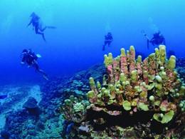Dans les eaux profondes lors d'une plongée