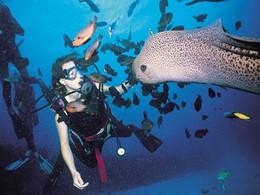 Explorez des fonds marins d'une richesse exceptionnelle de l'île Maurice
