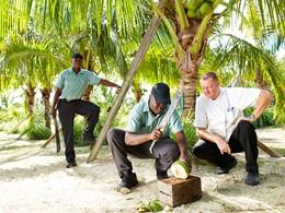 Plantation de cocotiers au Parrot Cay & Como Shambala
