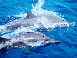 Les dauphins proches de la pension Les Relais de Joséphine