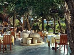 Savoure une cuisine raffinée au milieu des oliviers
