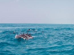 Rencontrez les dauphins