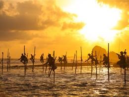 Pêche sur échasse au sud du Sri Lanka