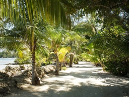 Détente à l'ombre des palmiers